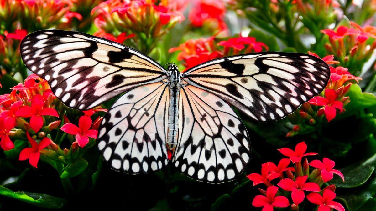 Transformación Magia Evolución mariposa